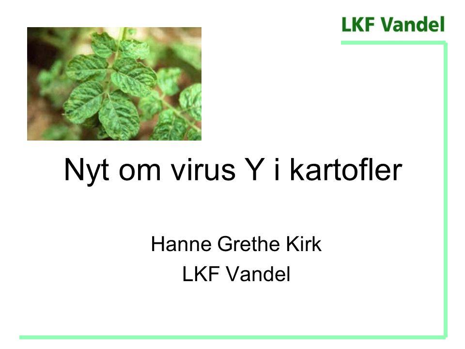 Nyt om virus Y i kartofler