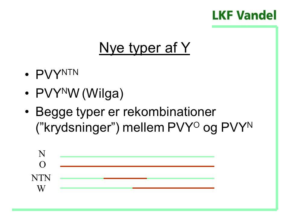 Nye typer af Y PVYNTN PVYNW (Wilga)