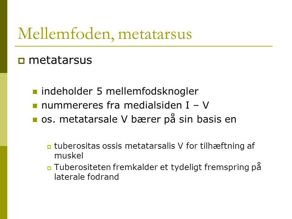 Mellemfoden, metatarsus