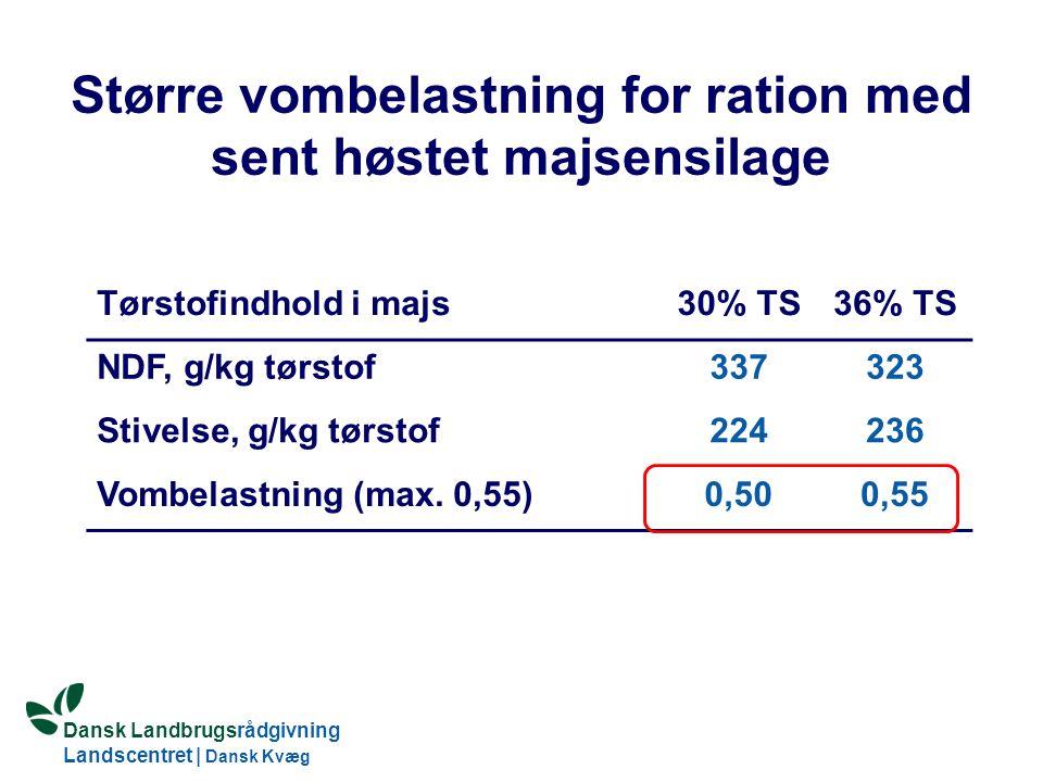 Større vombelastning for ration med sent høstet majsensilage