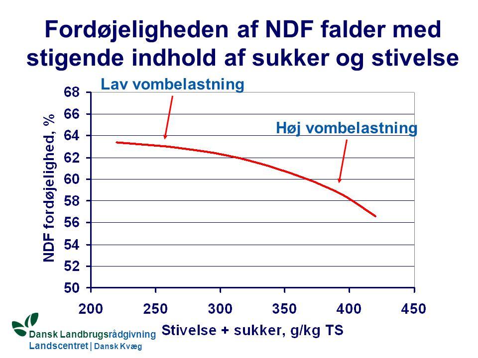 Fordøjeligheden af NDF falder med stigende indhold af sukker og stivelse