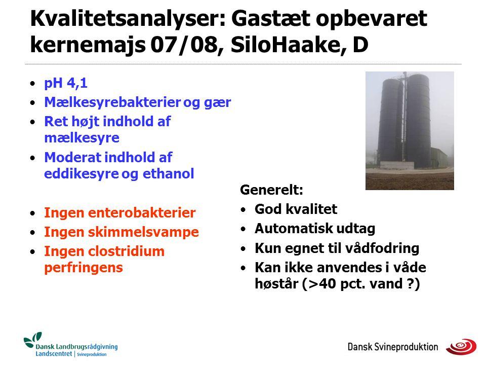 Kvalitetsanalyser: Gastæt opbevaret kernemajs 07/08, SiloHaake, D