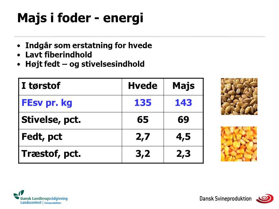 Majs i foder - energi I tørstof Hvede Majs FEsv pr. kg 135 143