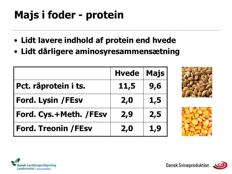 Majs i foder - protein Lidt lavere indhold af protein end hvede