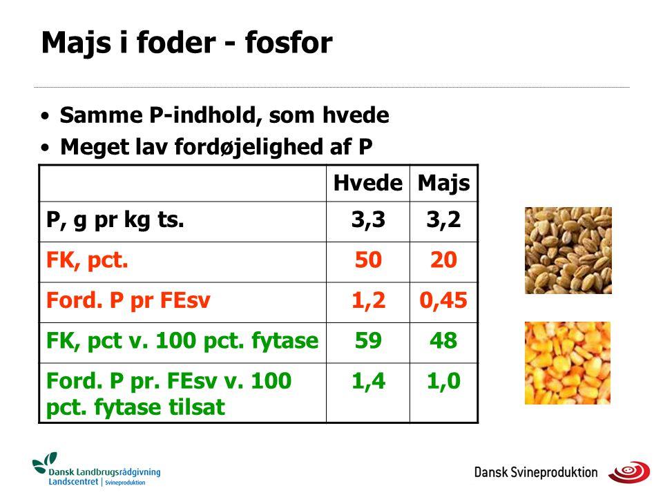 Majs i foder - fosfor Samme P-indhold, som hvede