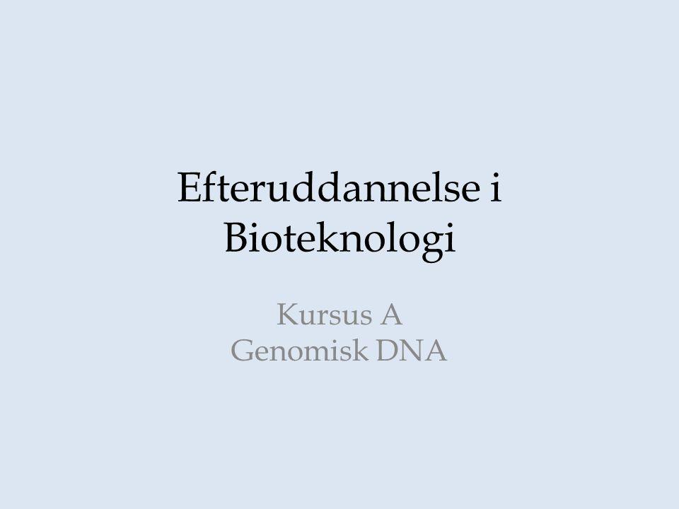 Efteruddannelse i Bioteknologi