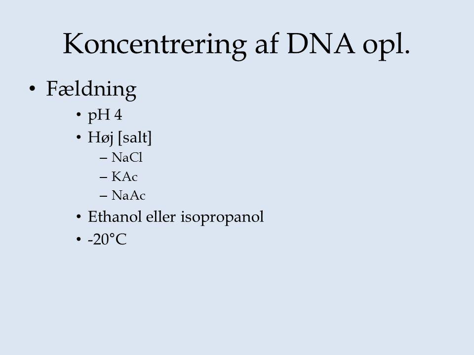 Koncentrering af DNA opl.