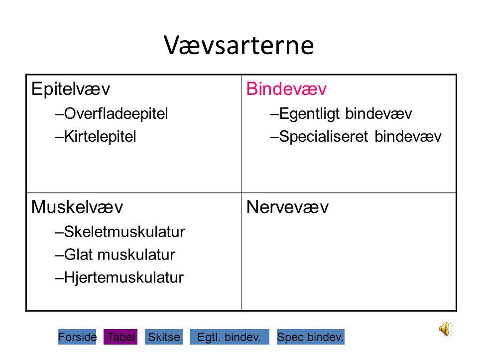 Vævsarterne Epitelvæv Bindevæv Muskelvæv Nervevæv Overfladeepitel