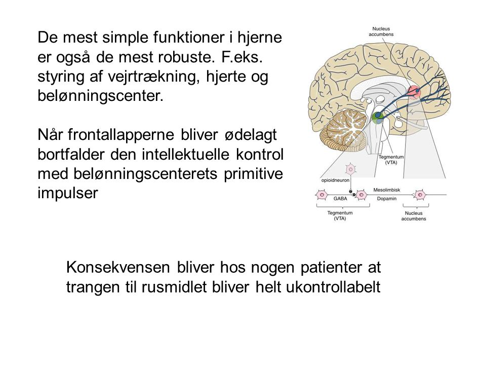 De mest simple funktioner i hjerne er også de mest robuste. F. eks