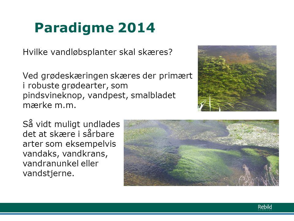 Paradigme 2014 Hvilke vandløbsplanter skal skæres