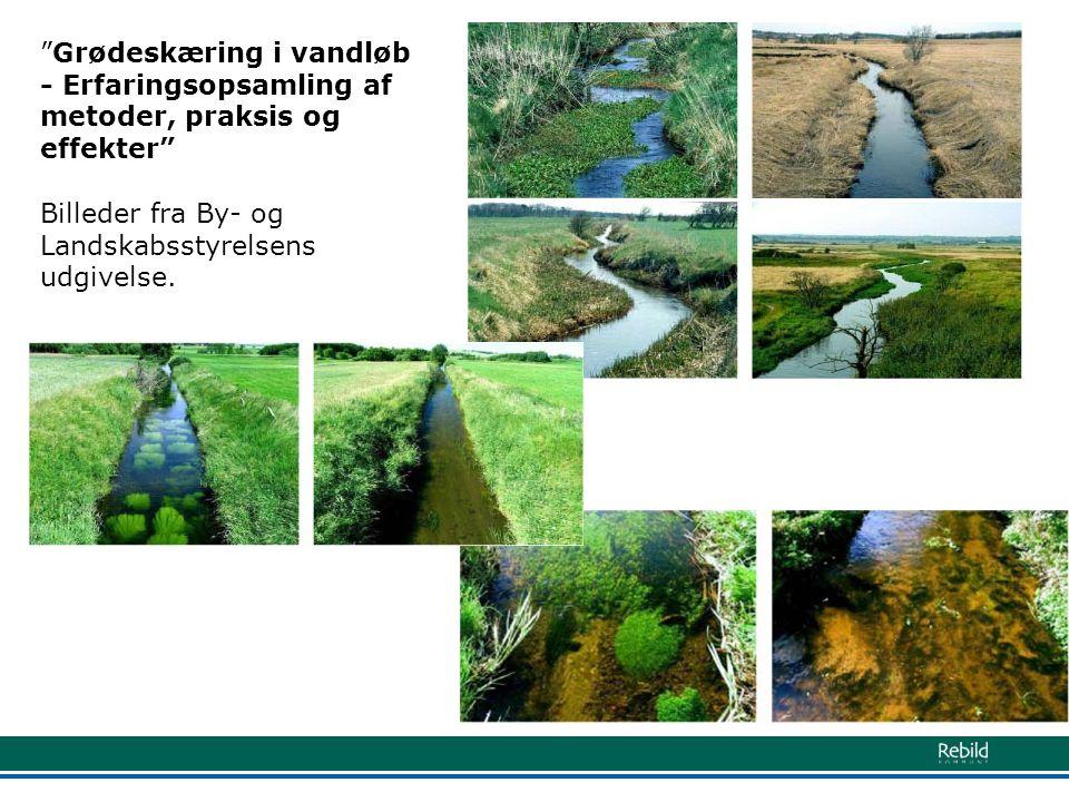 Grødeskæring i vandløb - Erfaringsopsamling af metoder, praksis og effekter