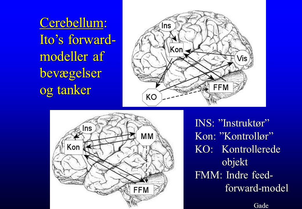Cerebellum: Ito's forward- modeller af bevægelser og tanker