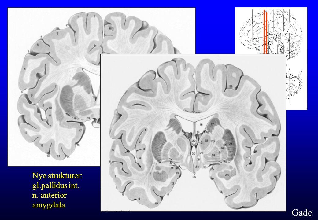 Nye strukturer: gl.pallidus int. n. anterior amygdala Gade