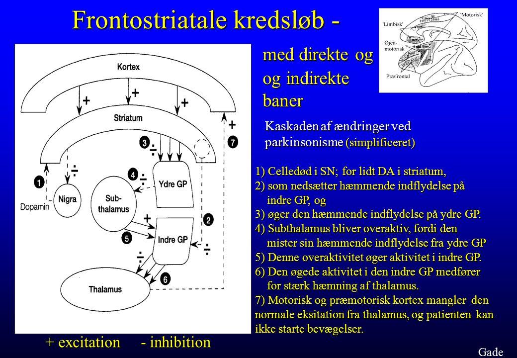 Frontostriatale kredsløb - med direkte og og indirekte baner