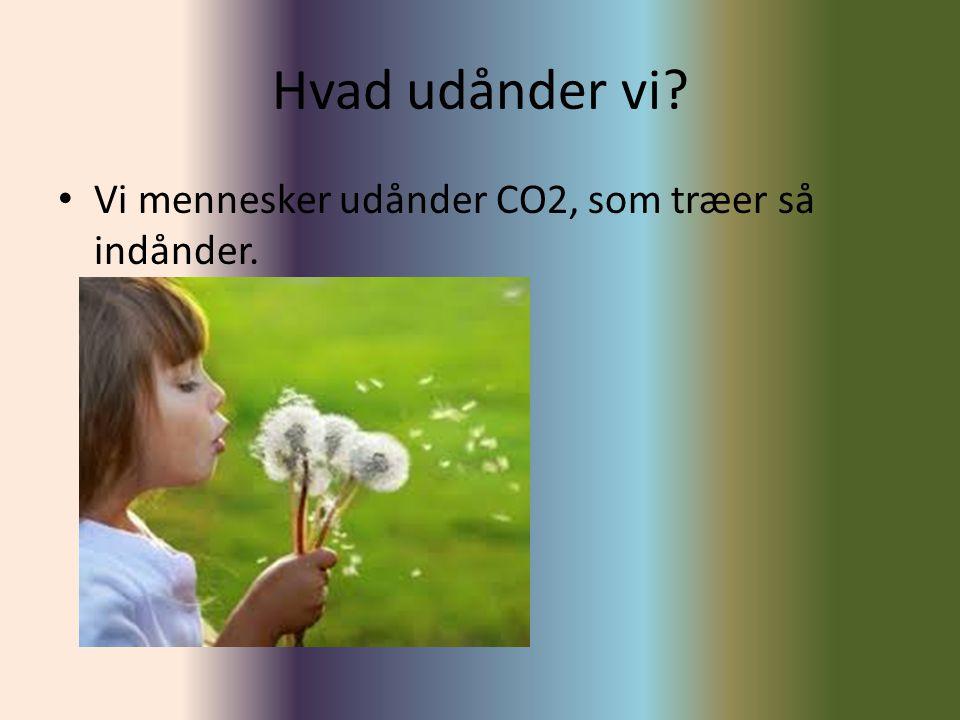 Hvad udånder vi Vi mennesker udånder CO2, som træer så indånder.