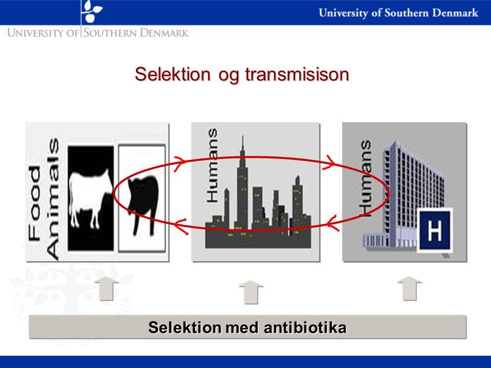 Selektion og transmisison