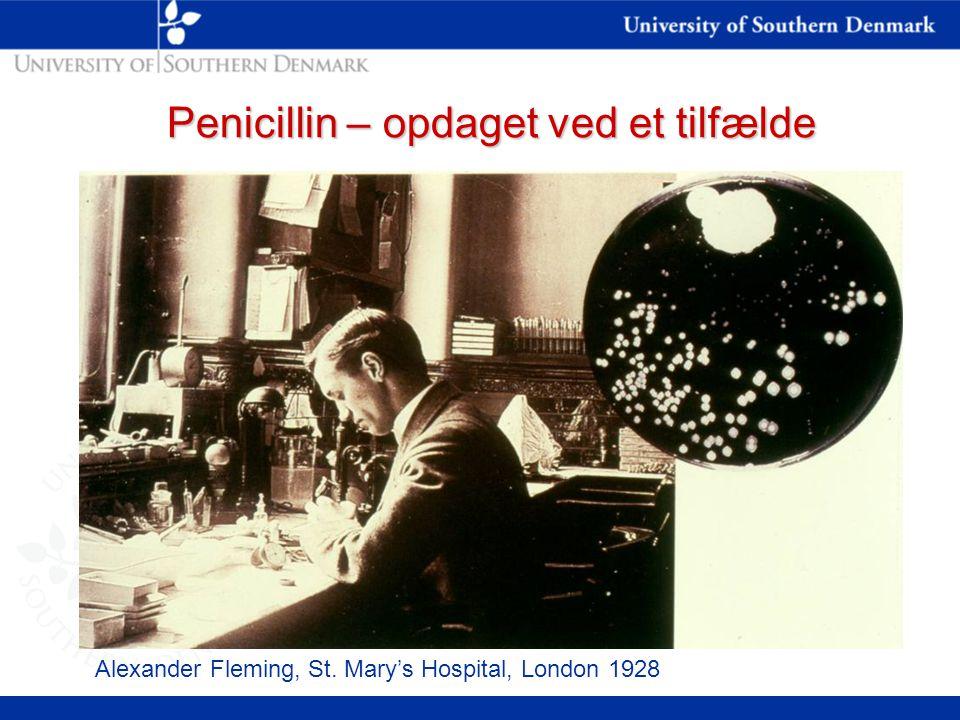 Penicillin – opdaget ved et tilfælde