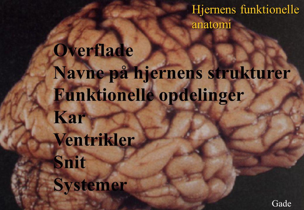 Navne på hjernens strukturer Funktionelle opdelinger Kar Ventrikler