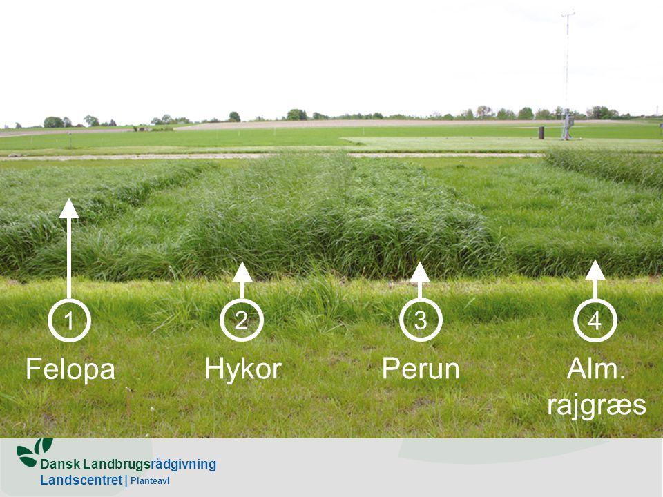 1 2 4 3 Felopa Hykor Perun Alm. rajgræs Planteavl