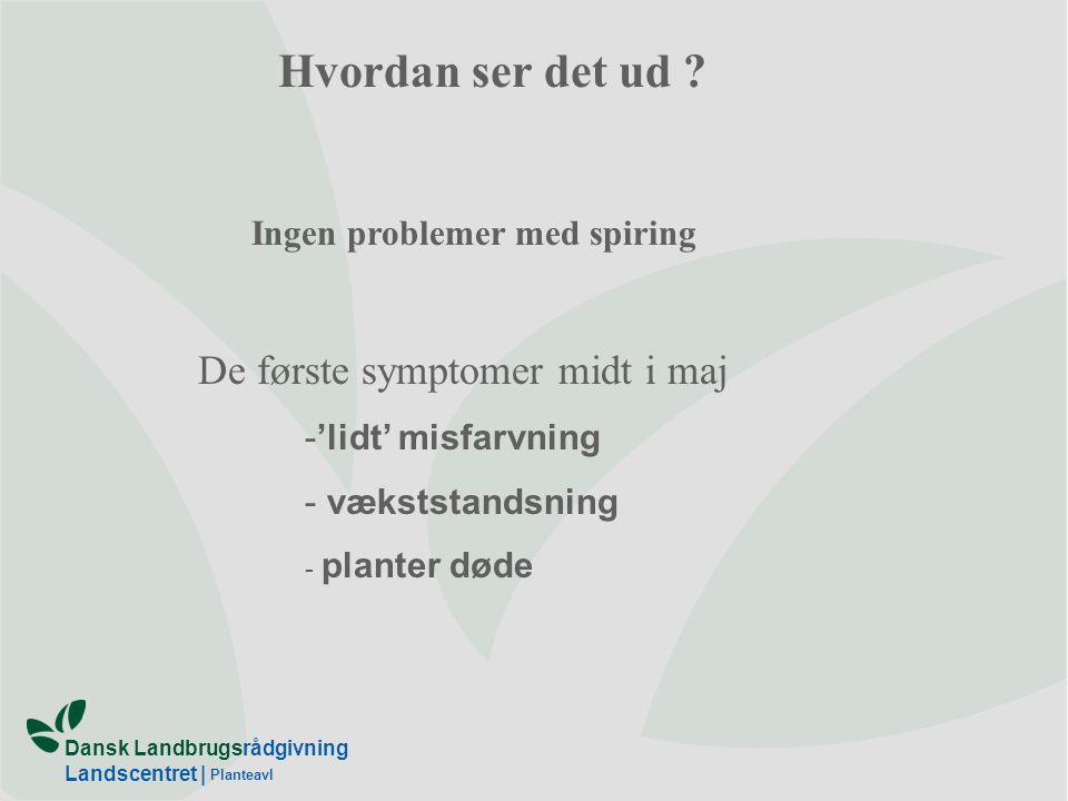 Hvordan ser det ud De første symptomer midt i maj