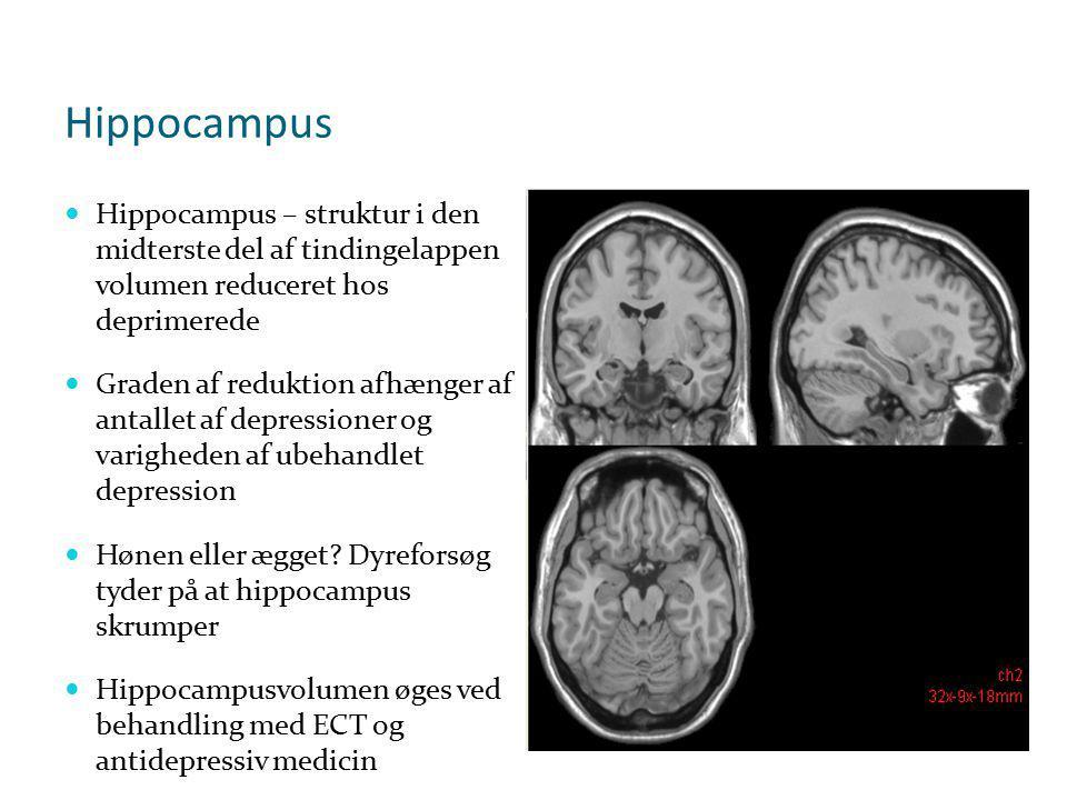 Hippocampus Hippocampus – struktur i den midterste del af tindingelappen volumen reduceret hos deprimerede.