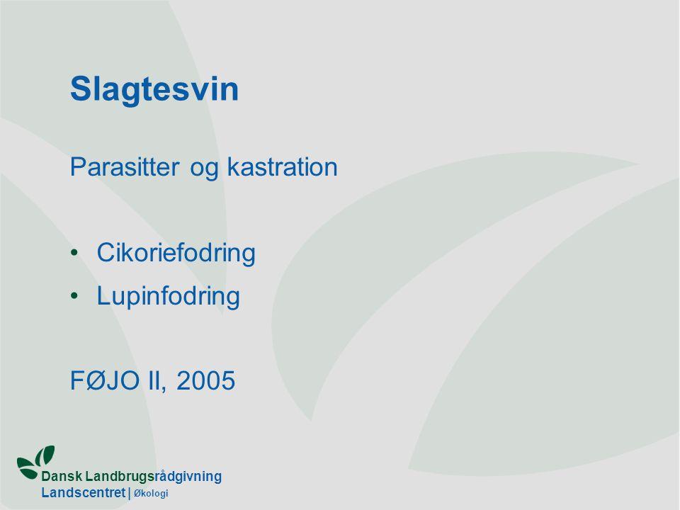 Slagtesvin Parasitter og kastration Cikoriefodring Lupinfodring