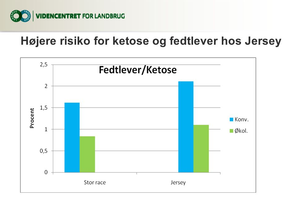 Højere risiko for ketose og fedtlever hos Jersey