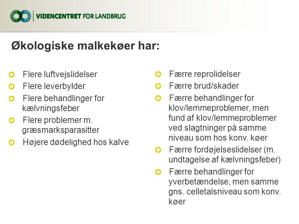Økologiske malkekøer har: