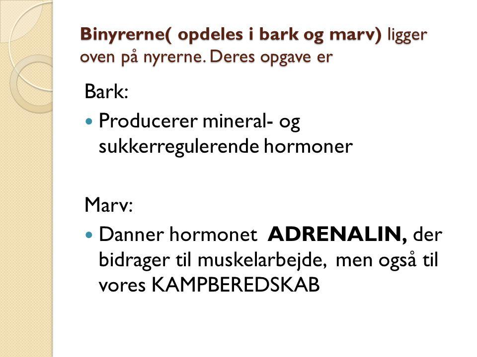 Producerer mineral- og sukkerregulerende hormoner