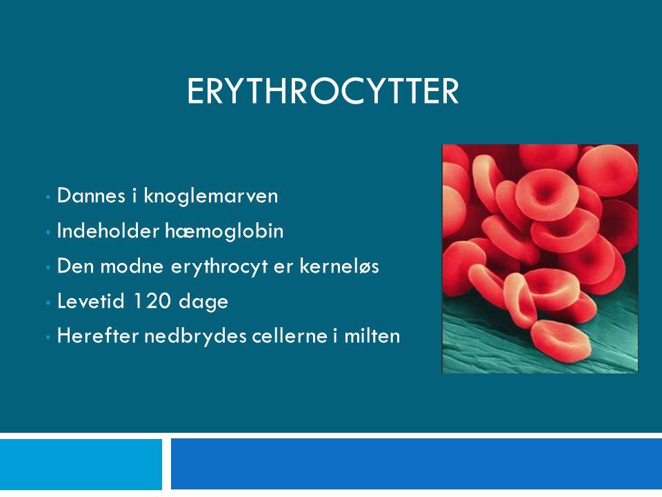 Erythrocytter Dannes i knoglemarven Indeholder hæmoglobin