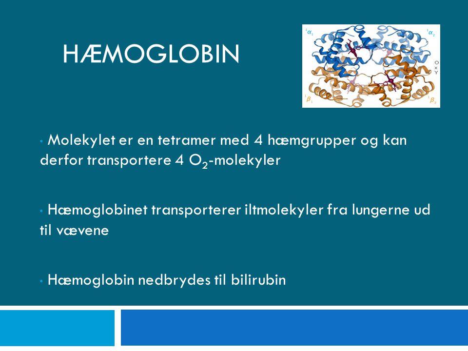 Hæmoglobin Molekylet er en tetramer med 4 hæmgrupper og kan derfor transportere 4 O2-molekyler.