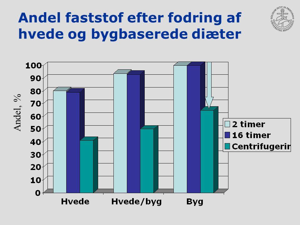 Andel faststof efter fodring af hvede og bygbaserede diæter