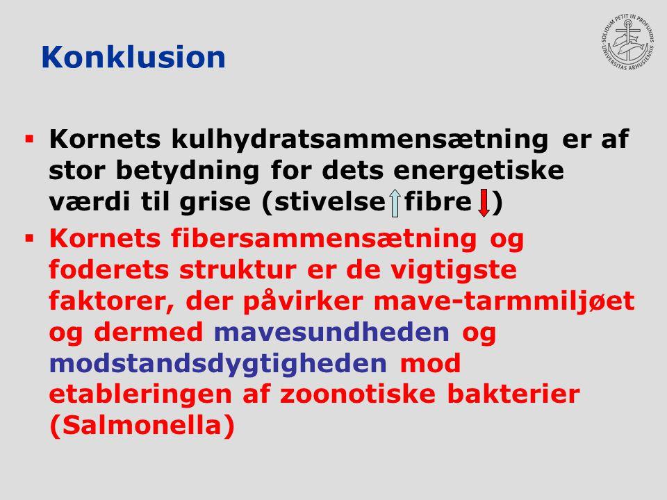 Konklusion Kornets kulhydratsammensætning er af stor betydning for dets energetiske værdi til grise (stivelse fibre )