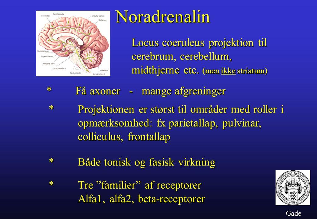 Noradrenalin Locus coeruleus projektion til cerebrum, cerebellum, midthjerne etc. (men ikke striatum)