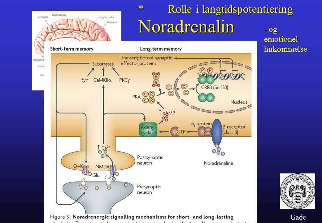Noradrenalin * Rolle i langtidspotentiering - og emotionel hukommelse