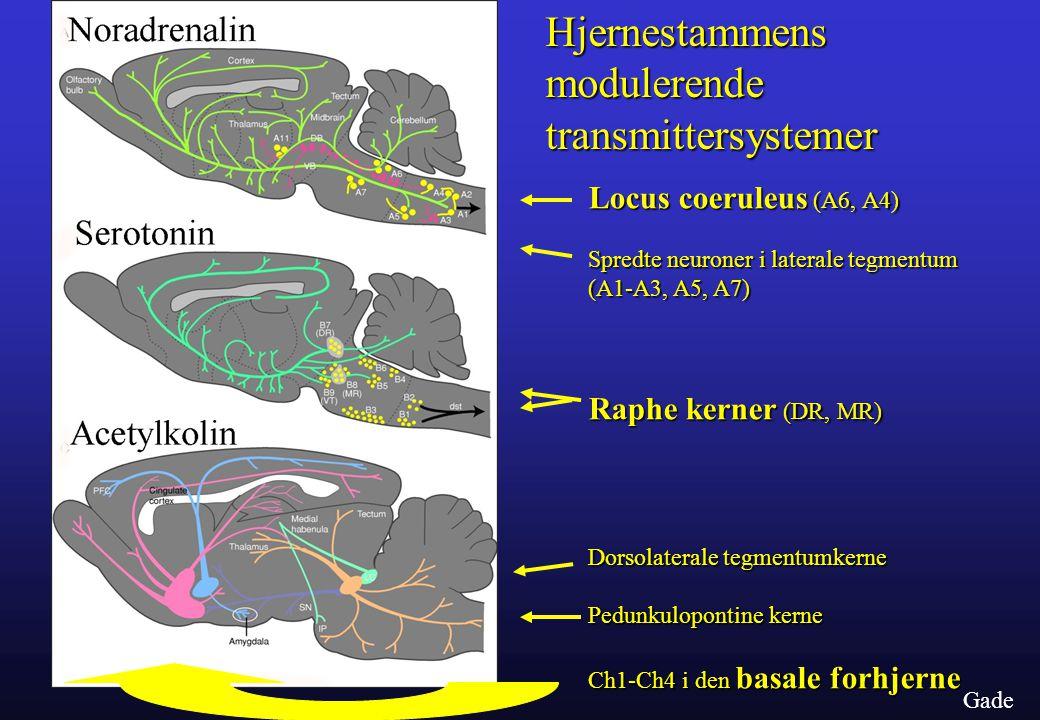 Hjernestammens modulerende transmittersystemer