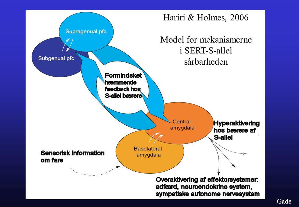 Hariri & Holmes, 2006 Model for mekanismerne i SERT-S-allel sårbarheden