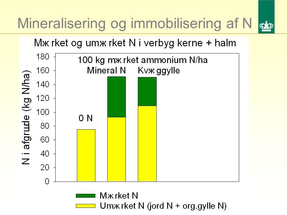 Mineralisering og immobilisering af N