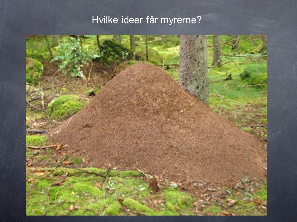 Hvilke ideer får myrerne