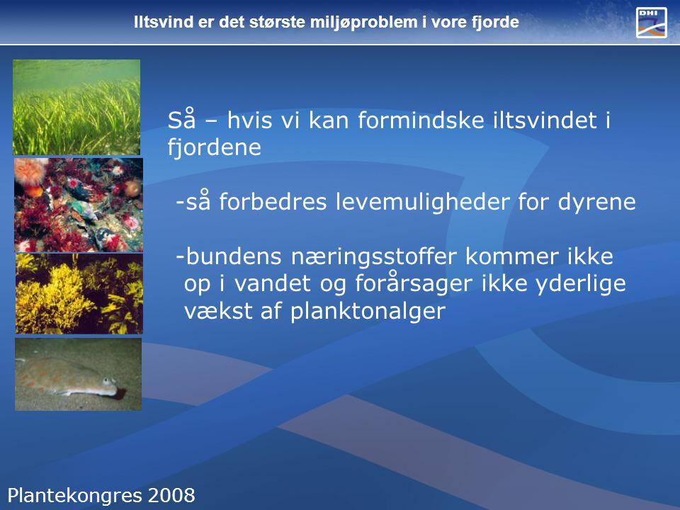 Iltsvind er det største miljøproblem i vore fjorde