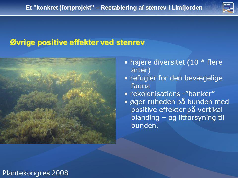 Et konkret (for)projekt – Reetablering af stenrev i Limfjorden