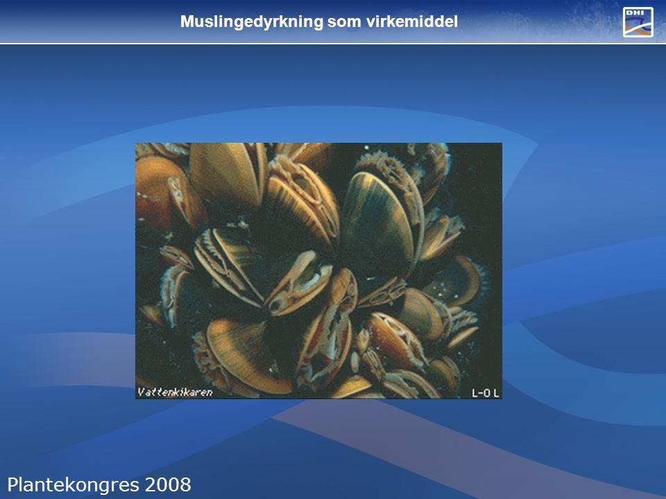 Muslingedyrkning som virkemiddel