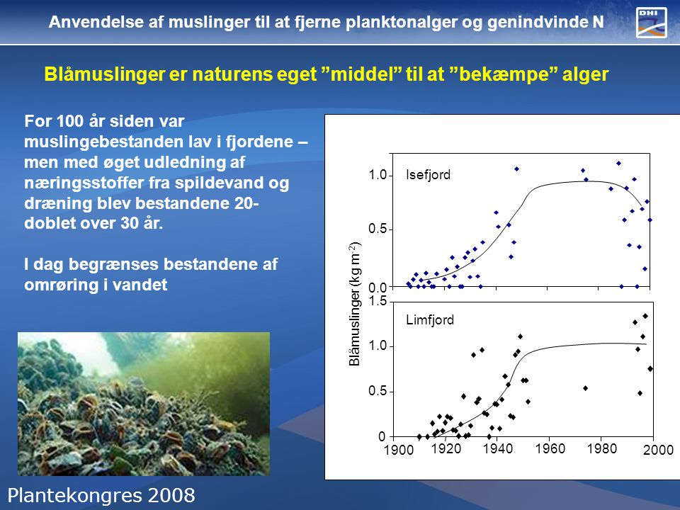 Blåmuslinger er naturens eget middel til at bekæmpe alger