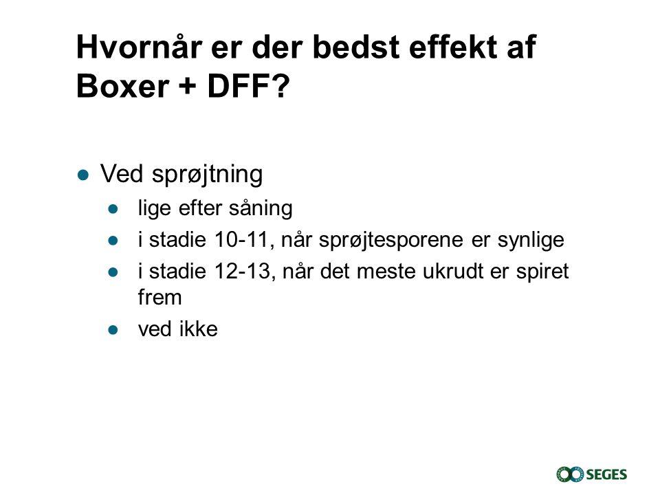 Hvornår er der bedst effekt af Boxer + DFF
