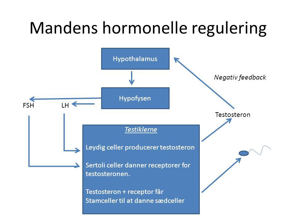 Mandens hormonelle regulering