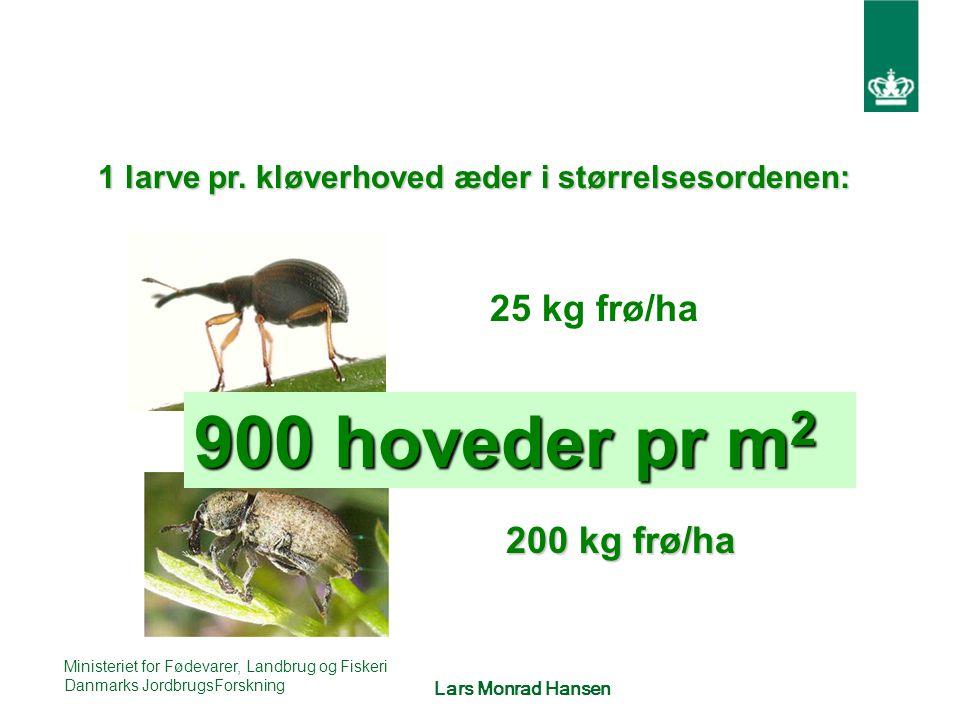 900 hoveder pr m2 25 kg frø/ha 200 kg frø/ha