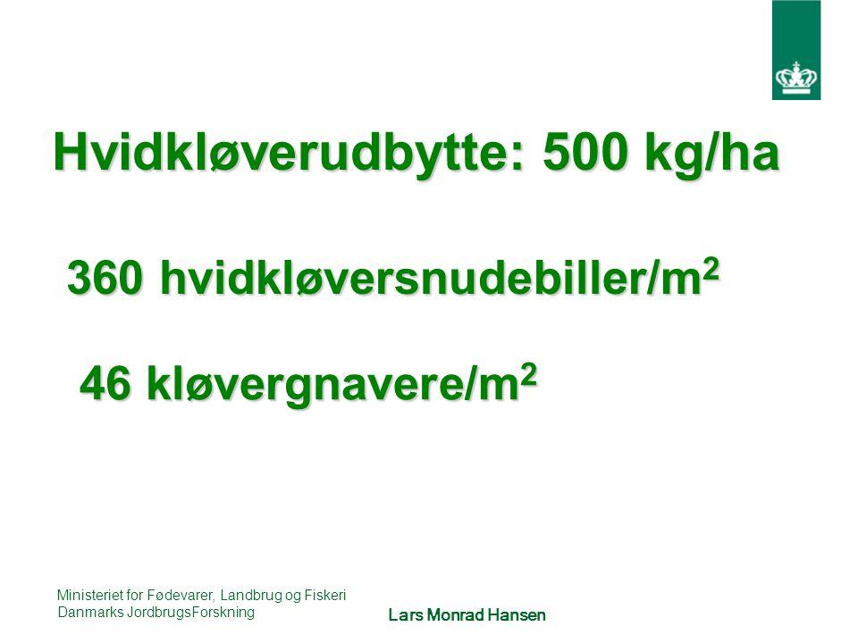 Hvidkløverudbytte: 500 kg/ha