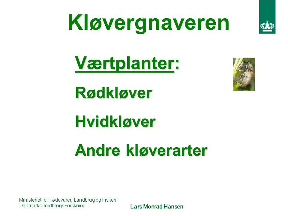 Kløvergnaveren Værtplanter: Rødkløver Hvidkløver Andre kløverarter
