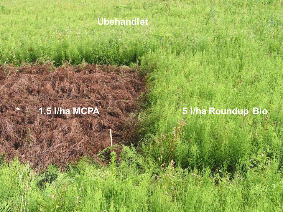 Ubehandlet 1.5 l/ha MCPA 5 l/ha Roundup Bio
