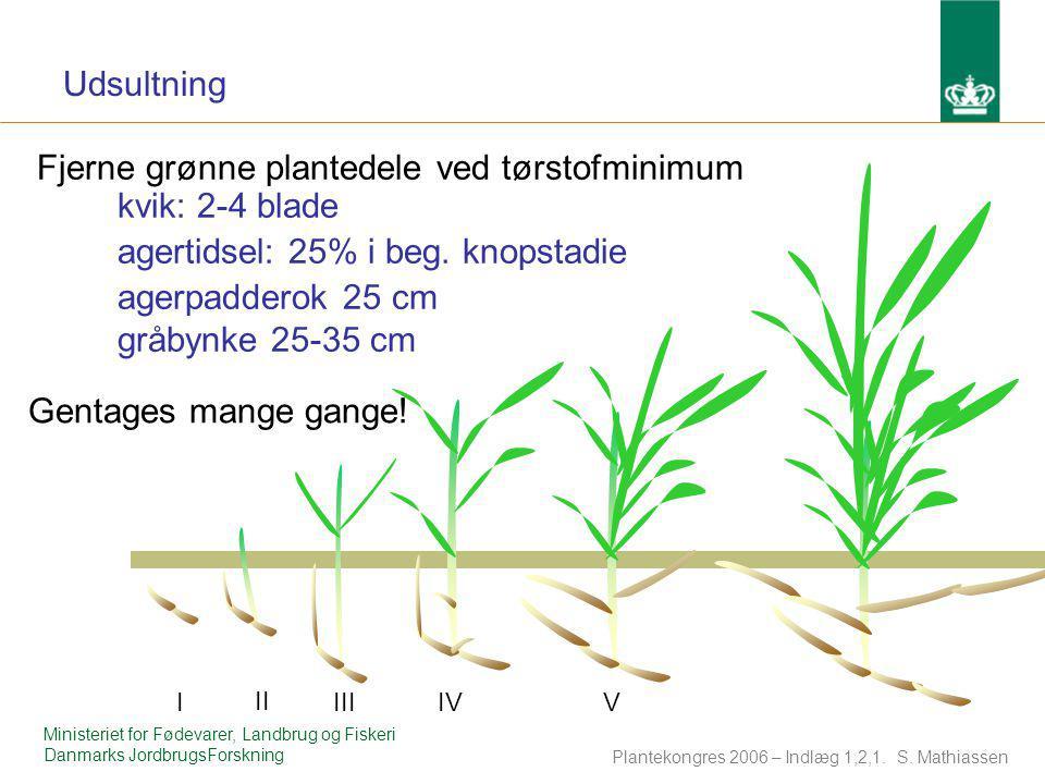 Fjerne grønne plantedele ved tørstofminimum kvik: 2-4 blade